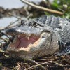 Everglades Day Safari Fort Myers, Florida Eco Tours