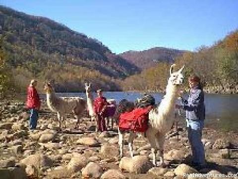 New River Llama Treks: Along the New River