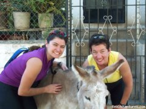 Donkey and friends. - Outpost Wilderness Adventure