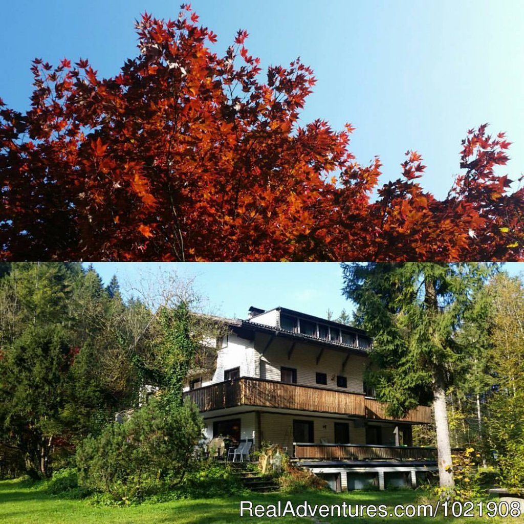 Image #1/10 | Aalfang, Austria | Youth Hostels | The TreeHouse Backpacker Hotel