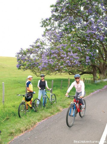 Biking Past the Jackaranda Trees - Downhill Bike Maui At Your Own Pace