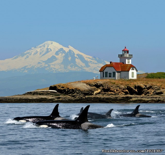 Whale Watching Adventure / Friday Harbor Cruise