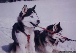 Dog sledding at Auberge and Nordic Spa Beaux Reves Sainte-Adele, Quebec Dog Sledding