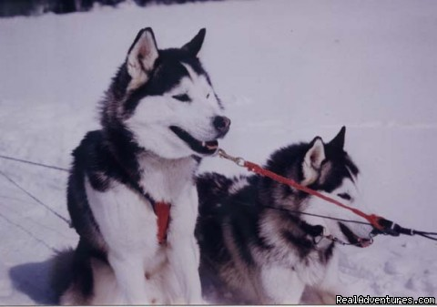 Dog sledding at Auberge and Nordic Spa Beaux Reves Dog Sledding Quebec