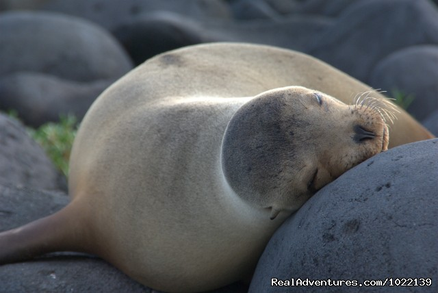 Sea lion - Explore the Galapagos Islands with Andean Trails