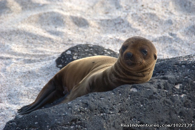 Explore the Galapagos Islands with Andean Trails