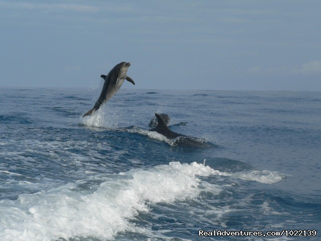 Leaping dolphins - Explore the Galapagos Islands with Andean Trails