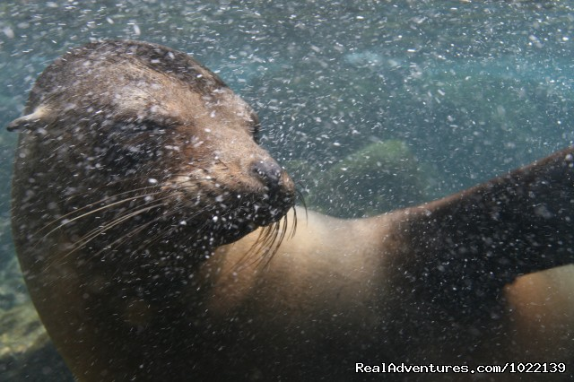 Sea lions (#20 of 22) - Explore the Galapagos Islands with Andean Trails