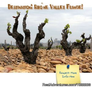 Splash Wine Tours to France Wine Tasting Chateauneuf du Pape, France