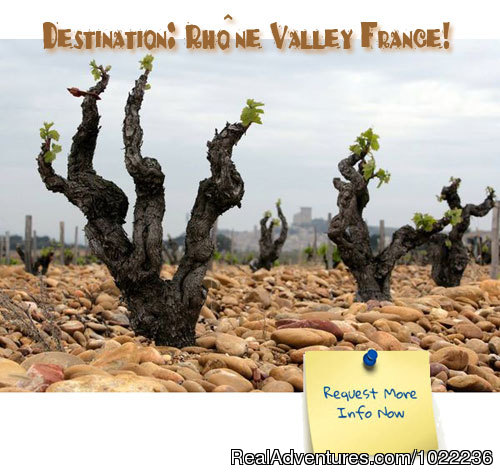 Splash Wine Tours to France