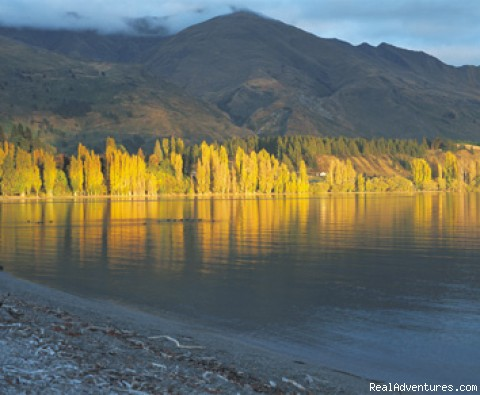 Golden Lake of Wanaka in Autumn - Alpine Motel Apartments -wanaka Nz