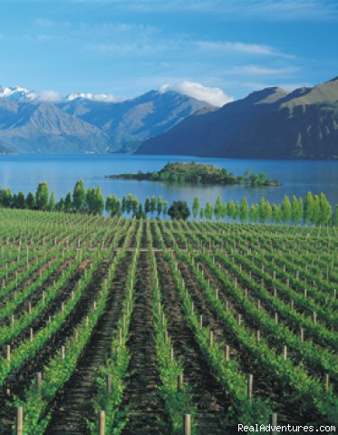 Rippon winery with fantastic views of the Lake - Alpine Motel Apartments -wanaka Nz