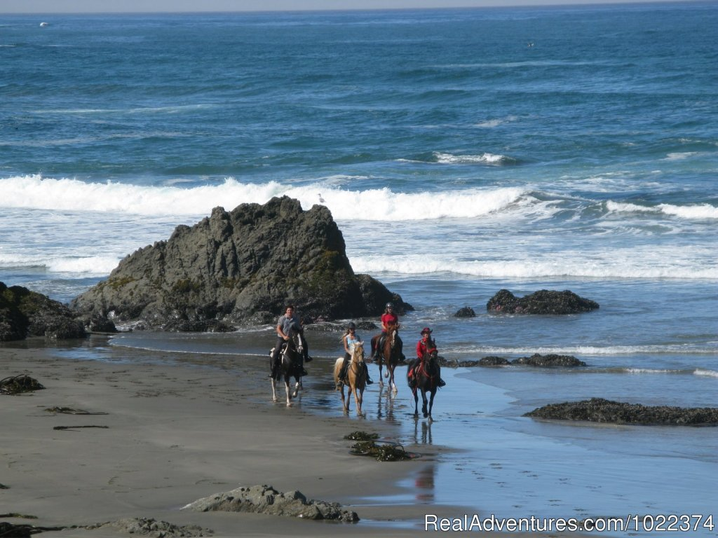 Horseback riding along Pacific beaches, in redwood forests and on bluffs overlooking the ocean.  Daily and custom rides on horses suitable for all experience levels.  Come ride with us!
