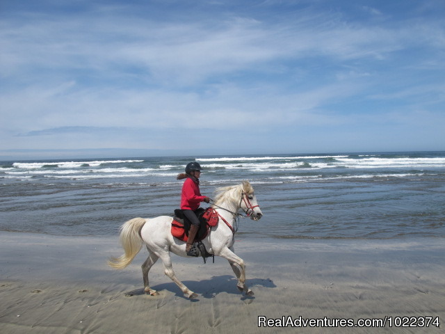 A good gallop! - Adventures on horseback at Ricochet Ridge Ranch