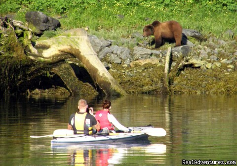 Kayaking with a Brown Bear greazing on shore - Alaska Yacht Charters Aboard Alaskan Song