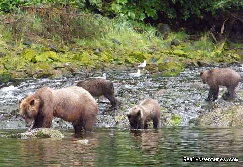 Sow Brown Bear wtih Three Cubs - Alaska Yacht Charters Aboard Alaskan Song