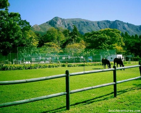 Allandale Holiday Cottages Cape Town, South Africa Vacation Rentals