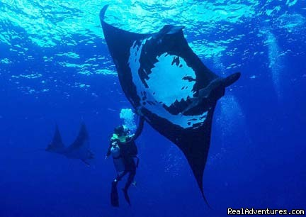 Catalina Islands Giant Pacific Manta Ray - Bill Beard's Costa Rica Volcano & Beach Vacation