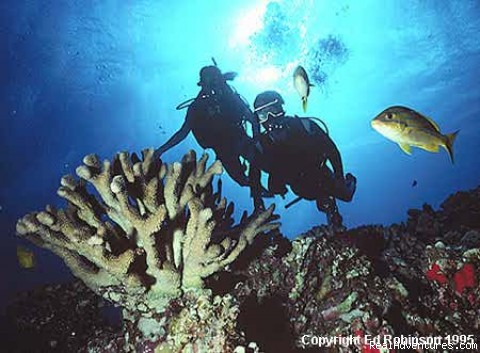 Ed Robinson's Diving Adventures Kihei, Hawaii Scuba & Snorkeling