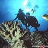 Ed Robinson's Diving Adventures Scuba & Snorkeling Kihei, Hawaii
