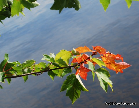 Fall Foliage at our Lakeside - Follansbee Inn on Kezar Lake