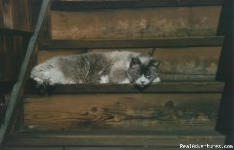 - The Bowman of Port Angeles Bed and Breakfast Inn