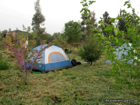 Camping Area In The Nearby Wood (#10 of 18) - Karaso galillee country lodging