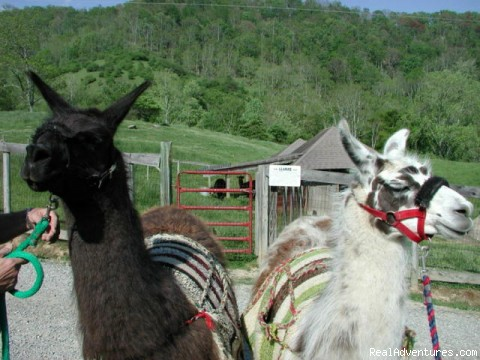 - Mountain Inn & Llama Farm at Windsong
