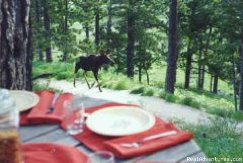 Spahn's Bighorn Mountain B&B,   L.L.C.: you never know who's coming to breakfast