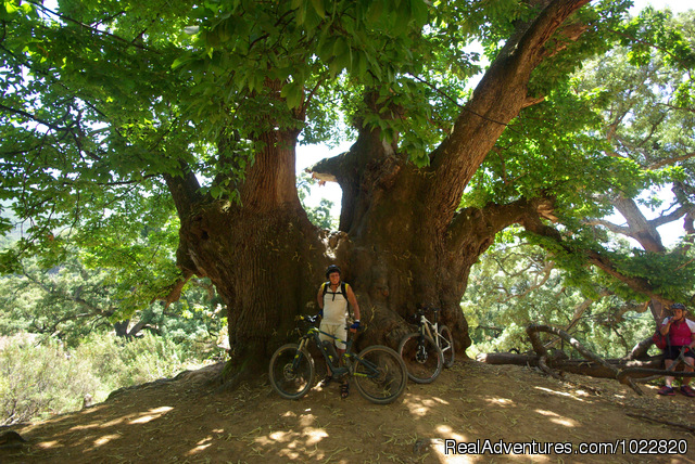 - Mountain Bike Tours in Fuengirola, Andalucia