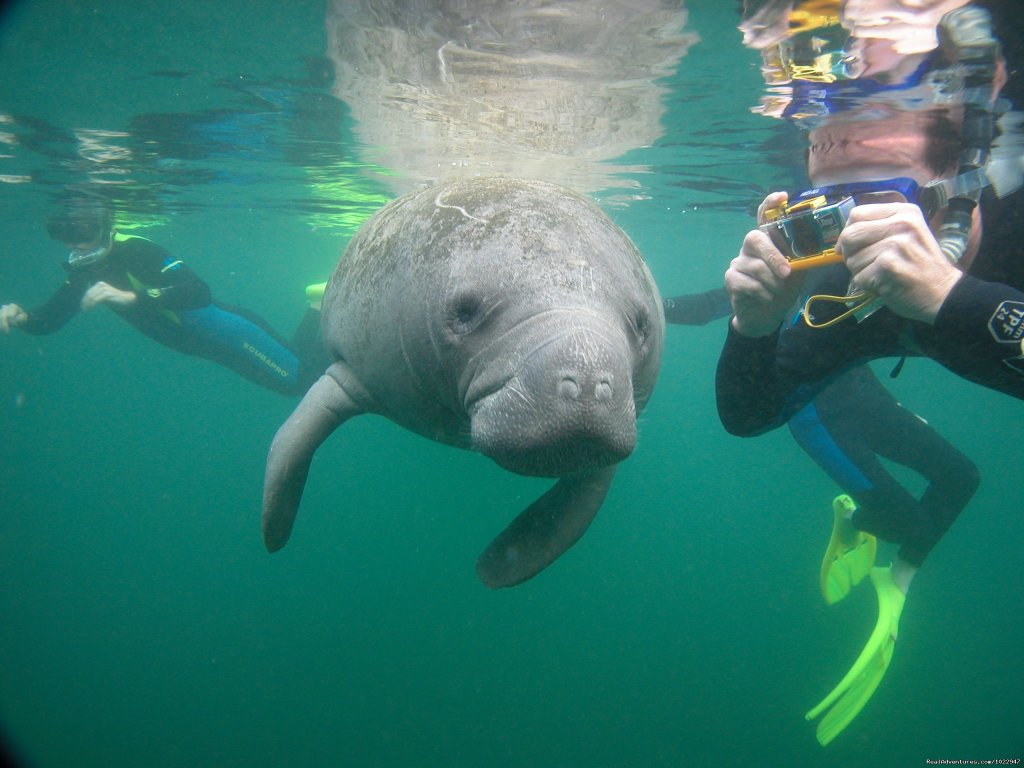 Always a photo Op | Image #3/8 | Snorkeling with Manatees in Crystal River