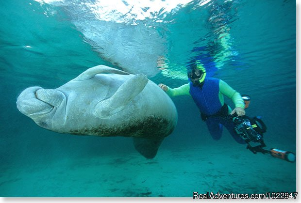 'Don't stop yet' | Image #5/8 | Snorkeling with Manatees in Crystal River