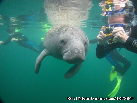 Always a photo Op - Snorkeling with Manatees in Crystal River