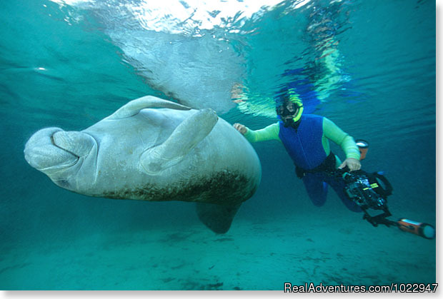 'Don't stop yet' - Snorkeling with Manatees in Crystal River