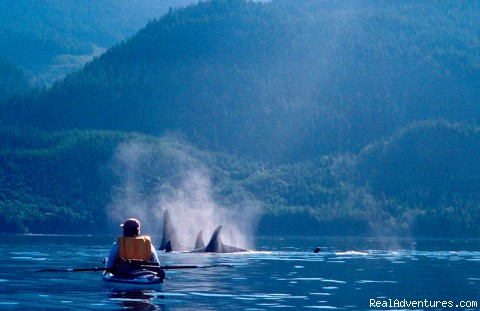 British Columbia Sea Kayaking Adventures