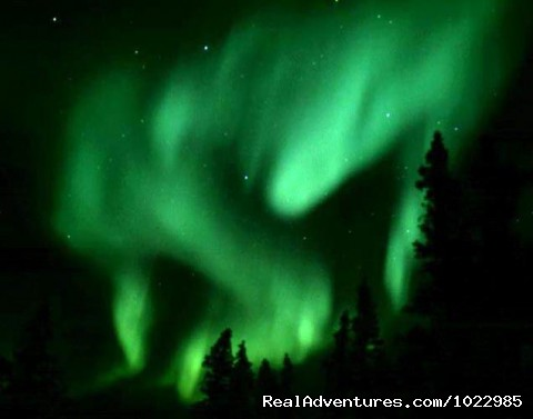 Northern Lights - Caribou, Autumn Colours & Aurora
