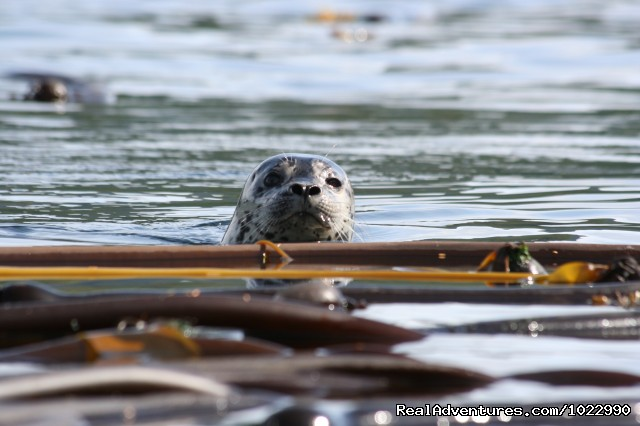 Harbour Seals - Best Kayak Trips Johnstone Strait