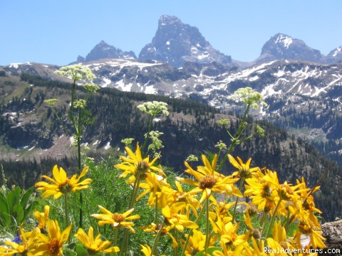 A view of the Tetons - Horseback riding in the Tetons & Yellowstone Park