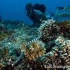 Wonders of the Deep, Sea snake