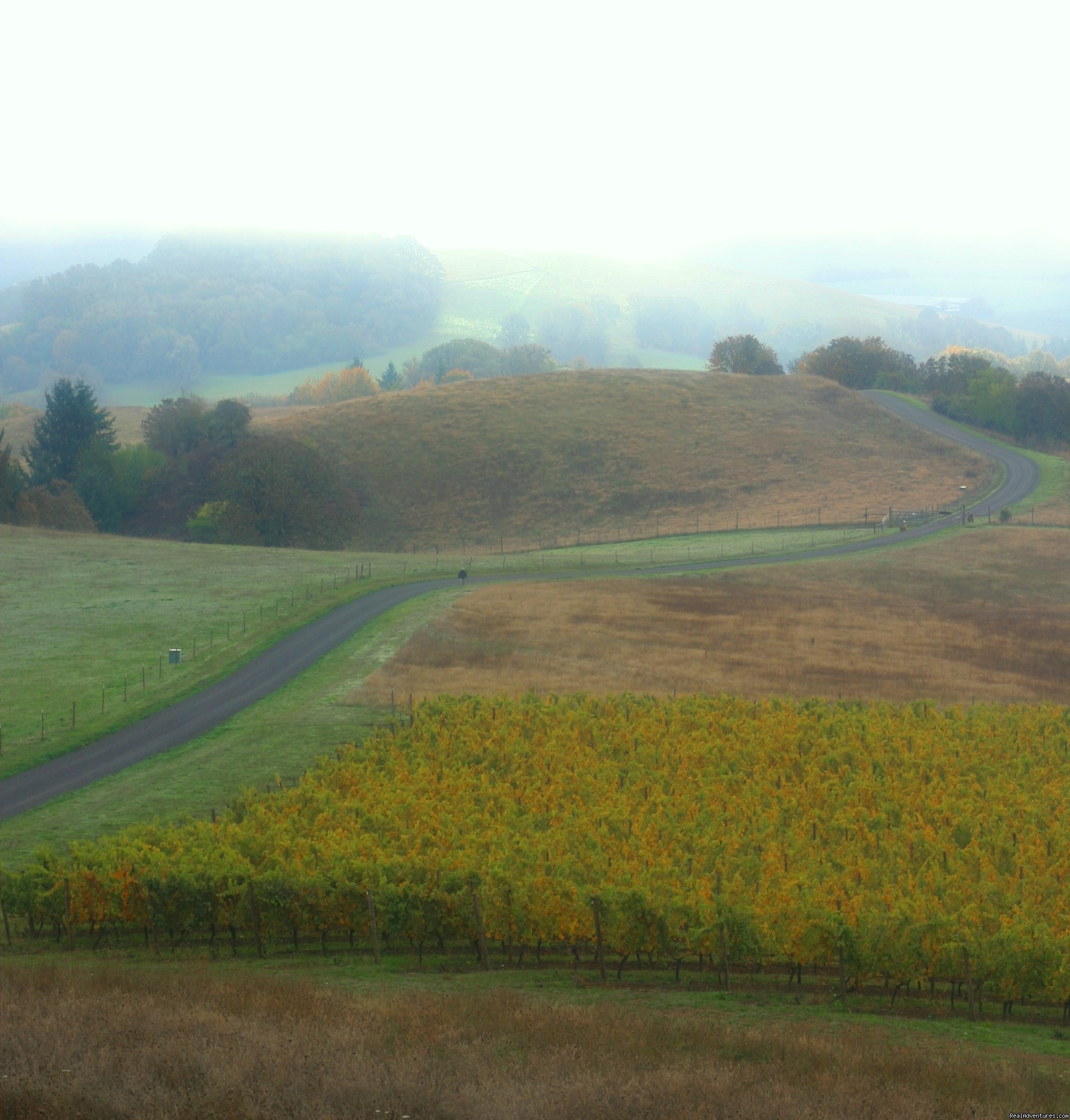 A road less traveled | Image #3/7 | Oregon's Premier Wine Country Inn - Youngberg Hill