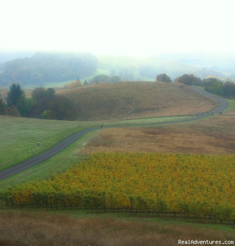 A road less traveled - Oregon's Premier Wine Country Inn - Youngberg Hill