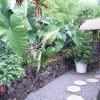 BeBack Hawaii
