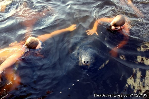 Swimming with the Manatees | Image #5/15 | Charter Service, Sailing School & Romantic Getaway