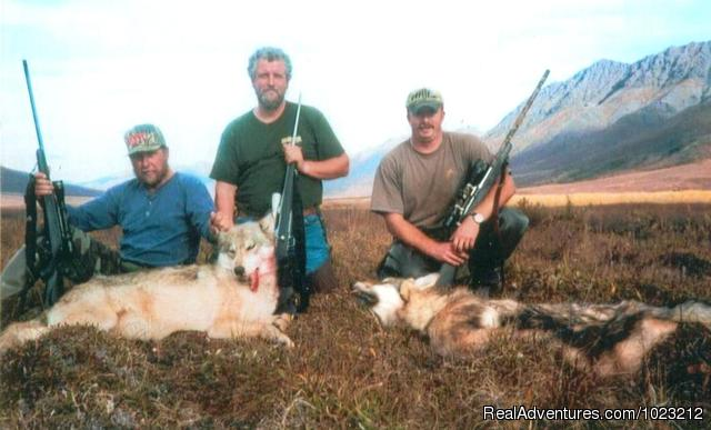 Caribou ! - Arctic Rivers Guide & Booking Service
