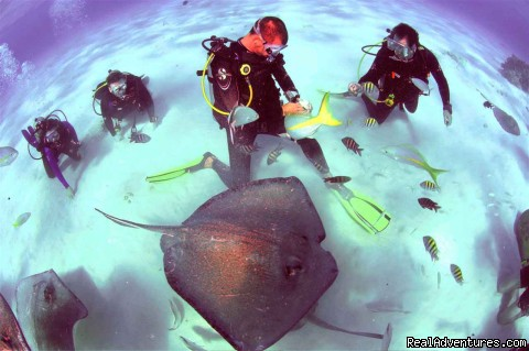 Stingray City - Divetech @ Lighthouse Point