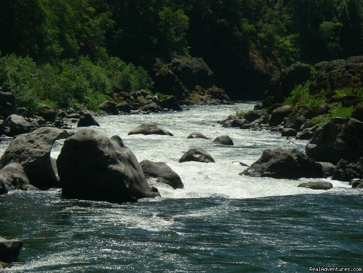 Blossom Bar Rapid, Rogue River | Image #3/16 | Family Rafting Vacations on Famous Western Rivers