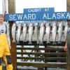 Alaskan Adventure Charters