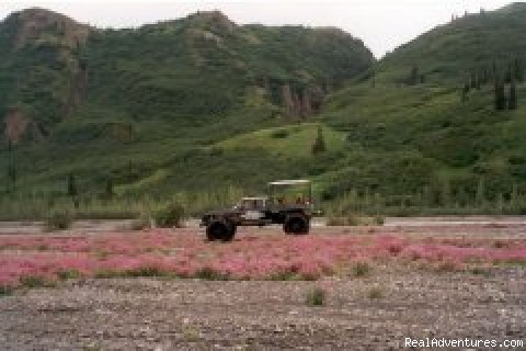 Denali Sightseeing Safaris LLC