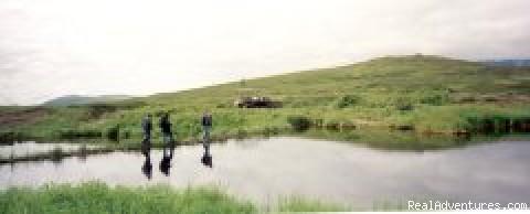 Photo #4 - Denali Sightseeing Safaris LLC