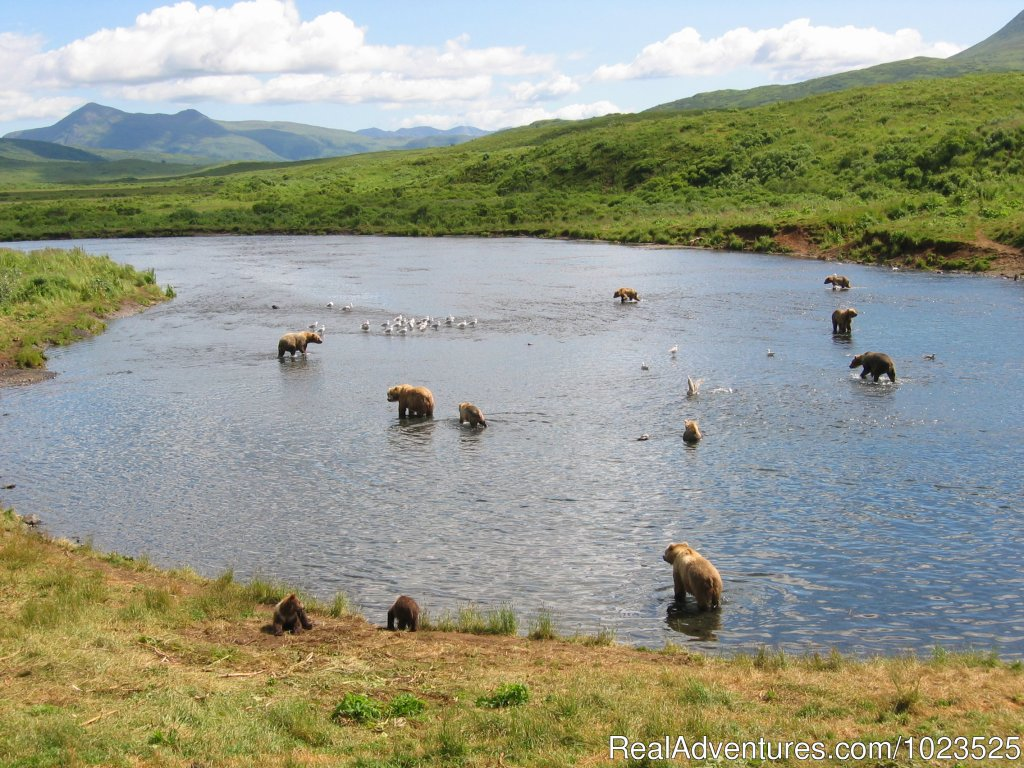 Brown Bear Watching | Image #5/11 | Alaska's Kodiak Wilderness Sport Fishing